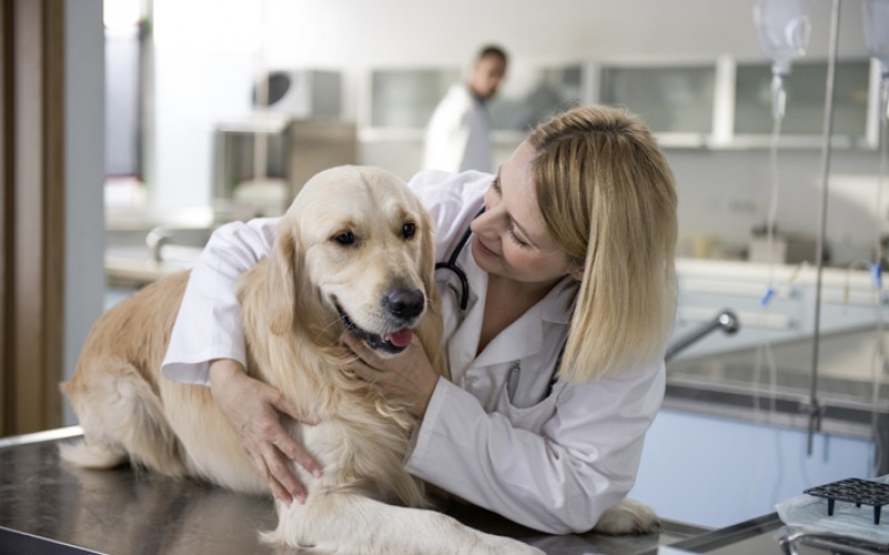 Some Tips to Help you Save Time as you Choose a Pet insurance Plan