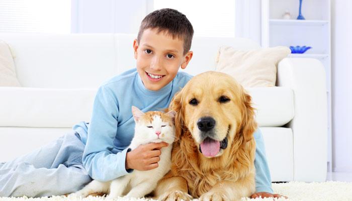 Pets 1